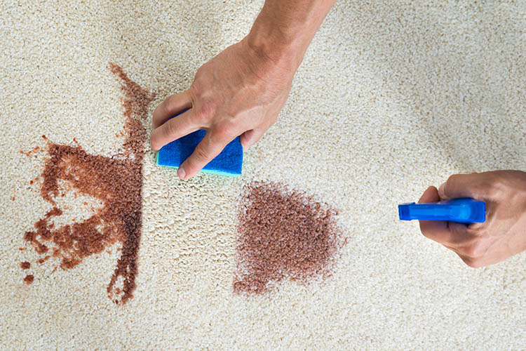 Super Easy Tips to Remove Stains from Your Carpets