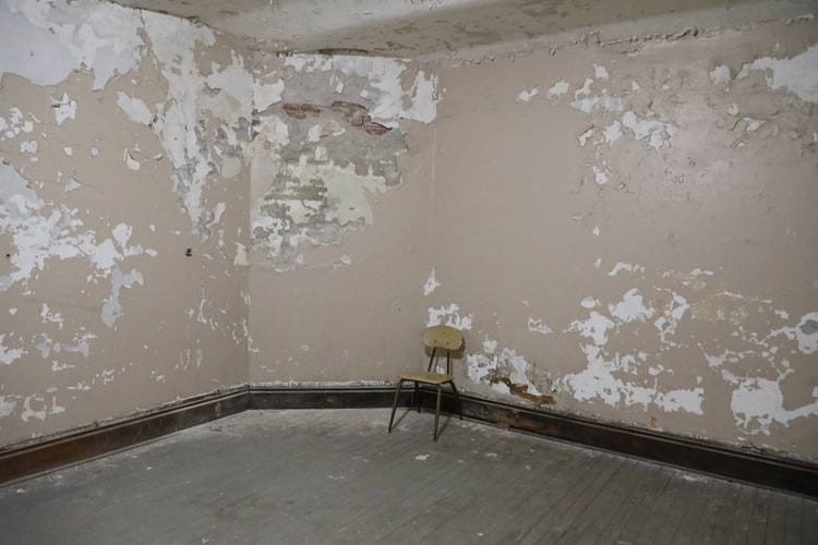 All You Need To Know About Mold infestations and how to tackle them